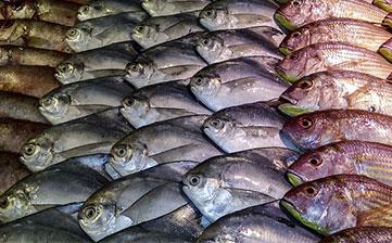 Seafood Transport